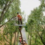 Großbaumpflege