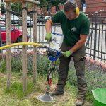 Baumstandort-Sanierung
