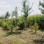 Anpflanzung von Hochstämmen, Sträuchern, Forstpflanzen